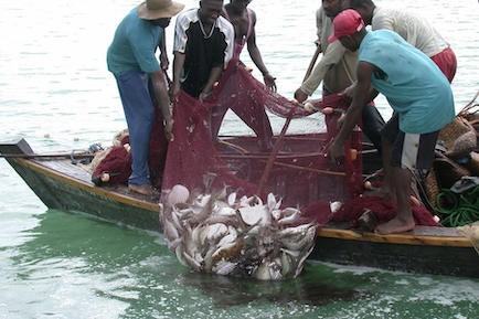 Illegal fishing in Lake Victoria endangers livelihoods and species